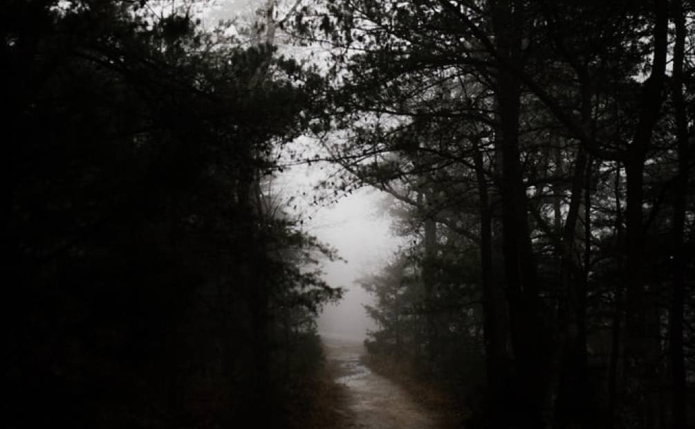 Haunted forest in the fog