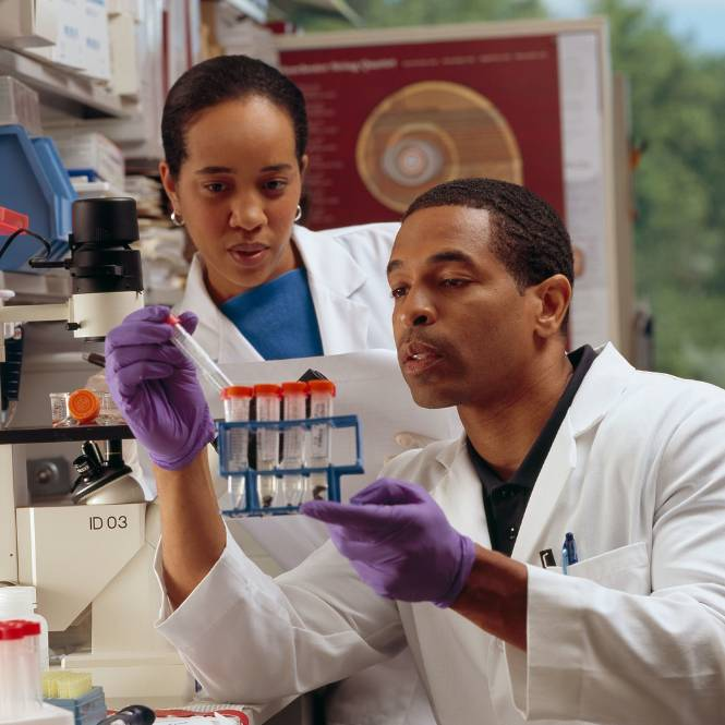 Two researchers conducting research
