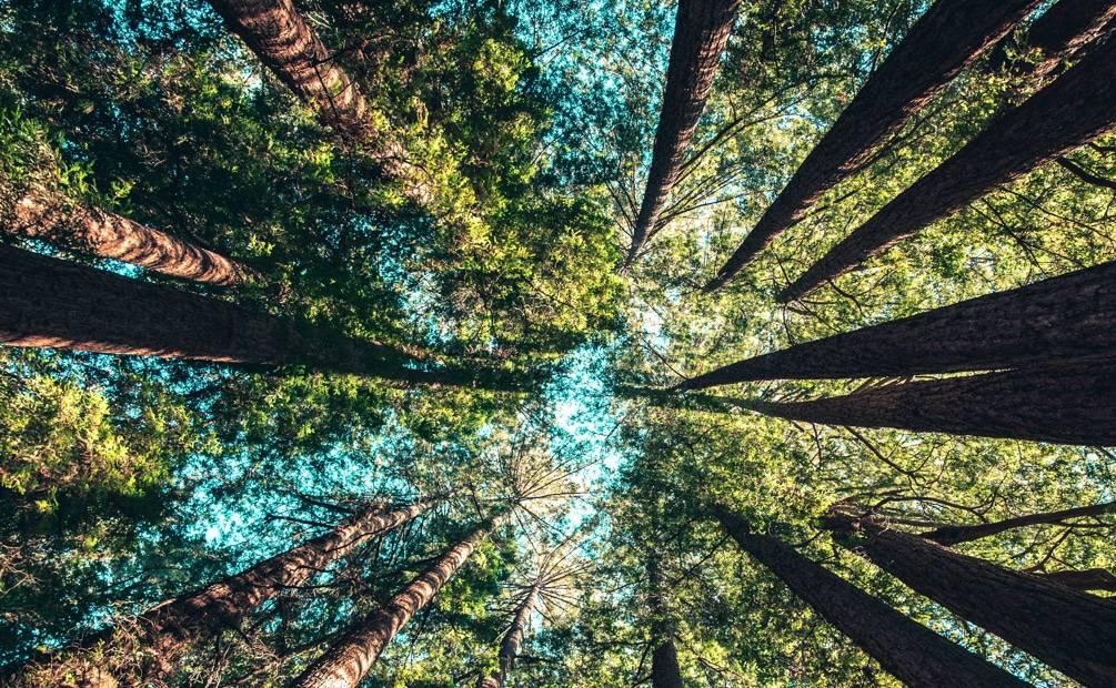 vue du ciel à travers les feuilles des arbres